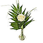 A White Rose in a Vase