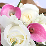 Pink Callas and Roses