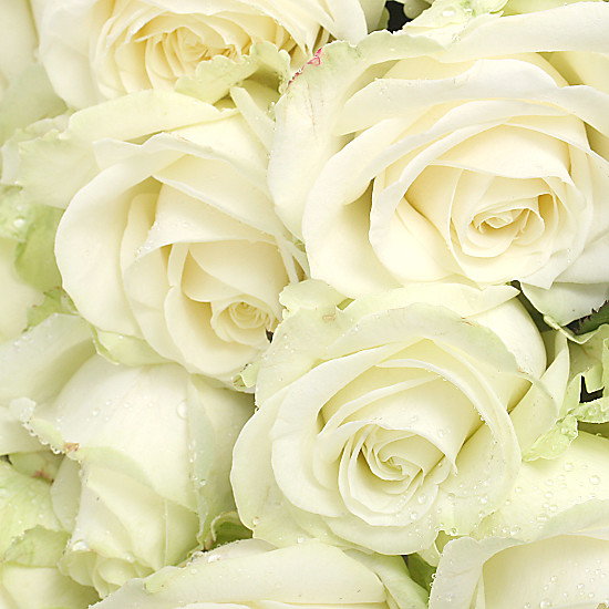 20 Luxury White Roses