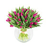 50 Purple Tulips