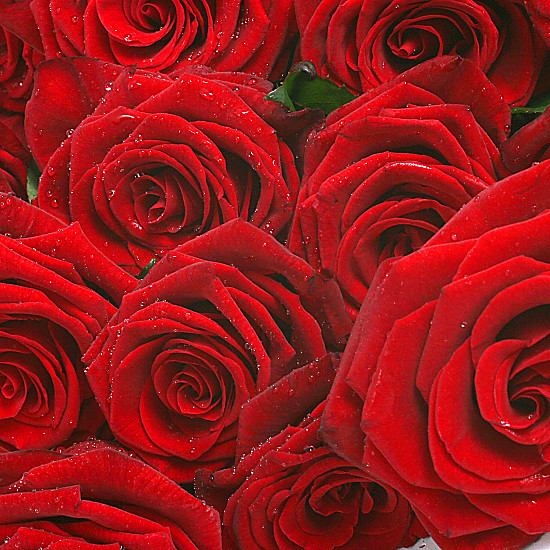 20 Luxury Red Roses