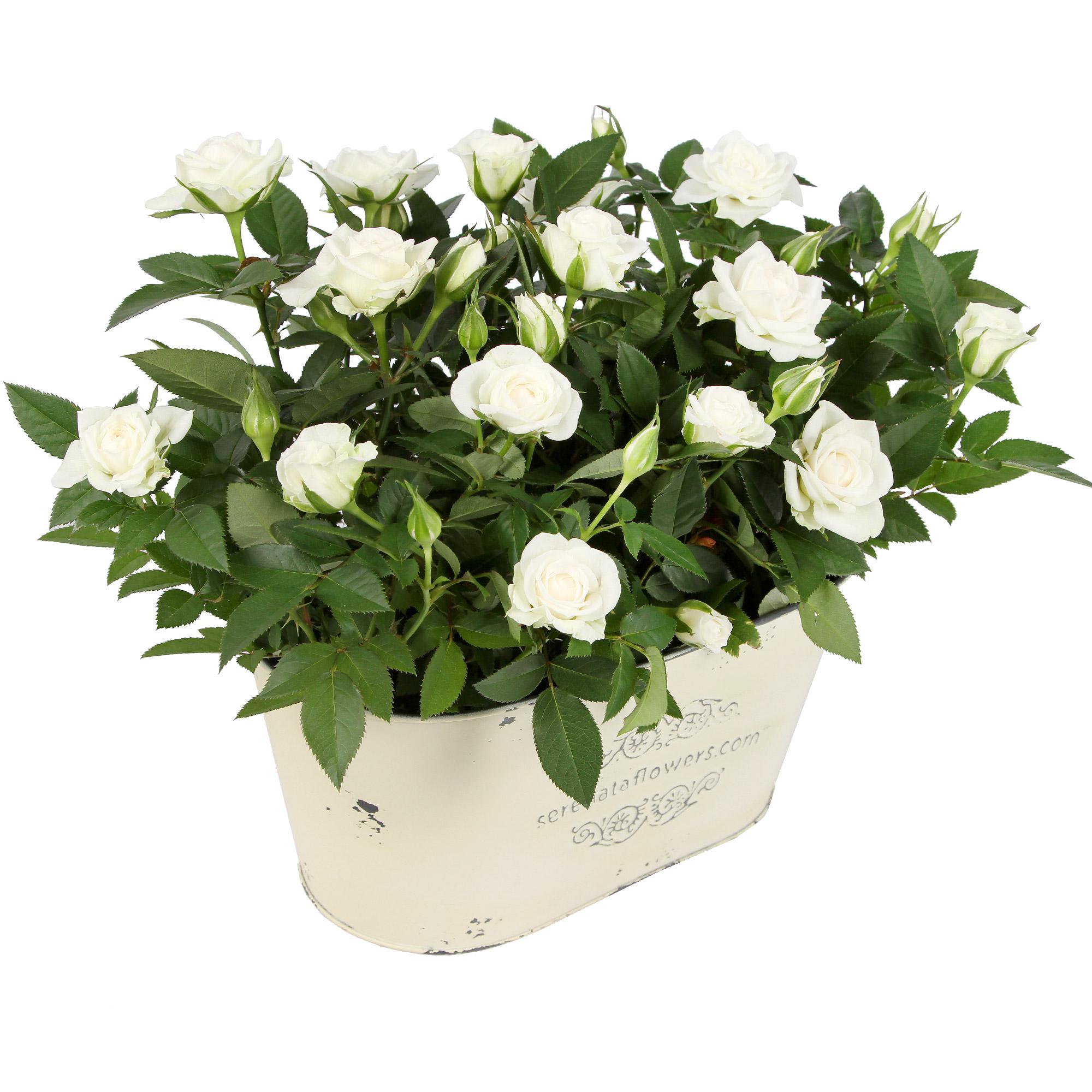 Plant Gift for Men