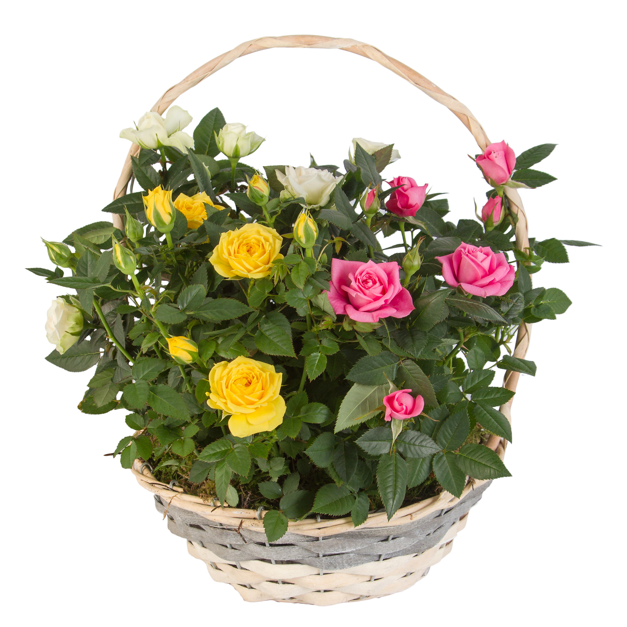 Planted Gift Basket for Women