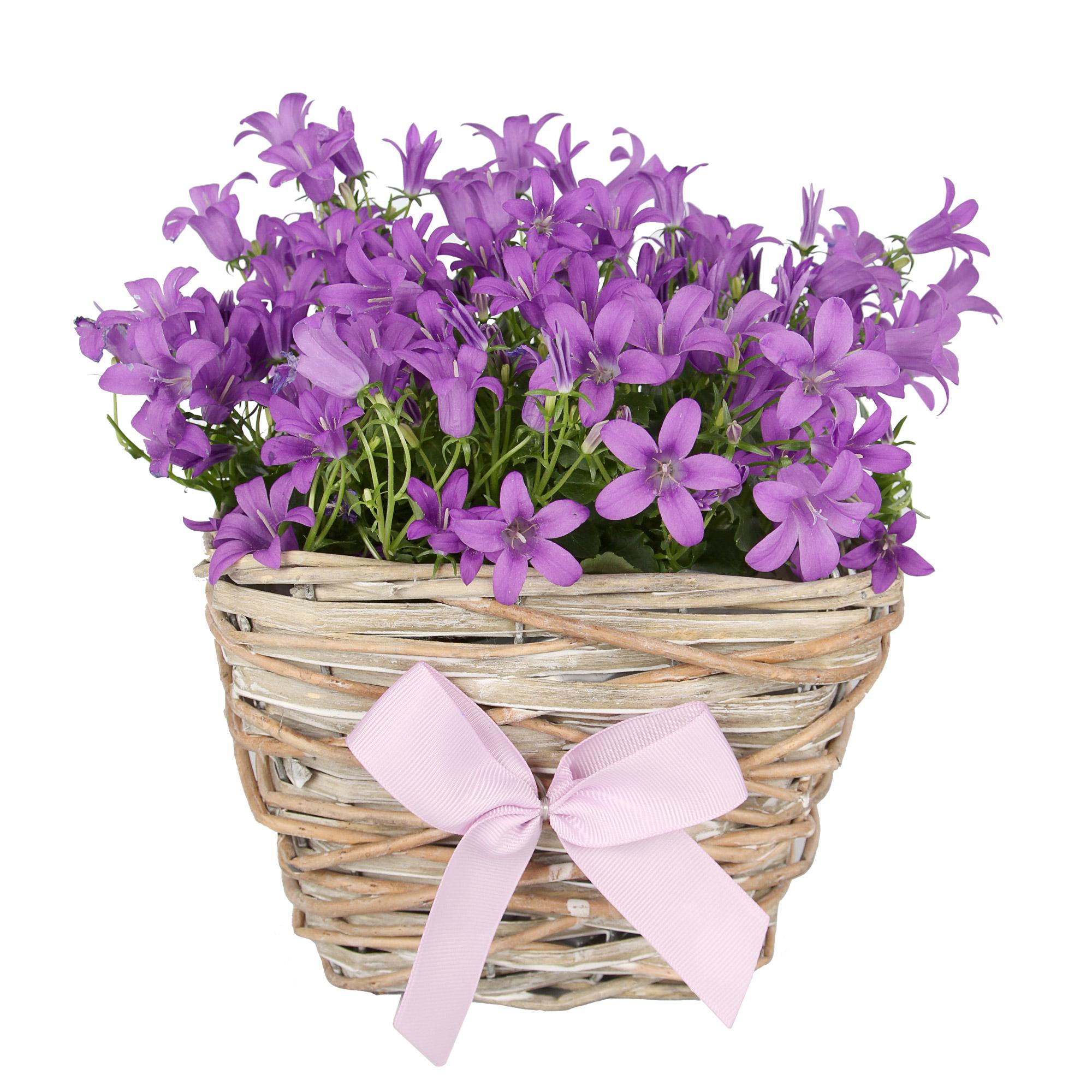 Plant Gift Ideas
