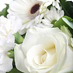 Heavenly White