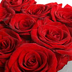 Red Roses - black cube