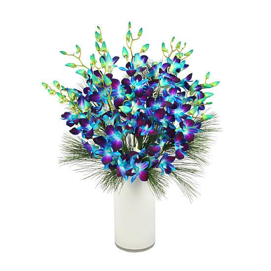 Blue Dendrobium