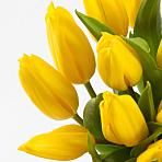 20 Yellow Tulips with Vase