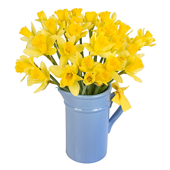 UK Daffodils with Jug