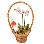 Rose Wine and Orchid Gift Basket