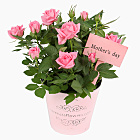 Mother`s Day Pink Rose