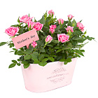 Mother`s Day Pink Rose Duo