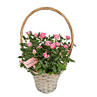 Mother`s Day Pink Rose Basket