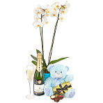 Baby Boy Orchid Gift Set with Champ...