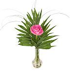 A Pink<br /> Rose in a Vase