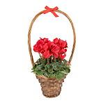 Red Cyclamen Basket
