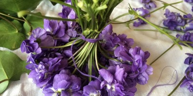 Violette de Toulouse