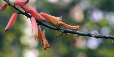 Fleurs Sans Arrosage