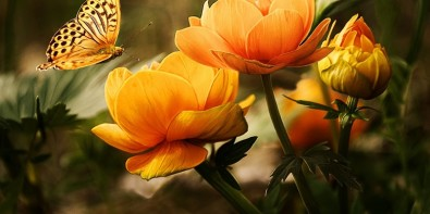 Signification Orange Fleurs