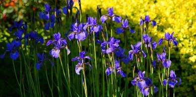 Fleurs de Mai
