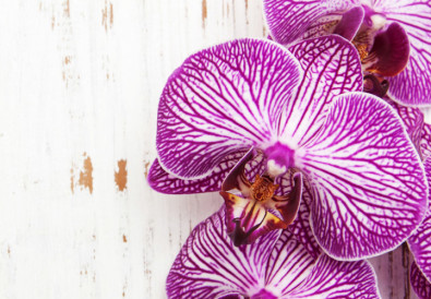 orchids-care-guide-hipper-france