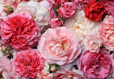 anniversary-flowers-what-they-say-about-you-hipper-france
