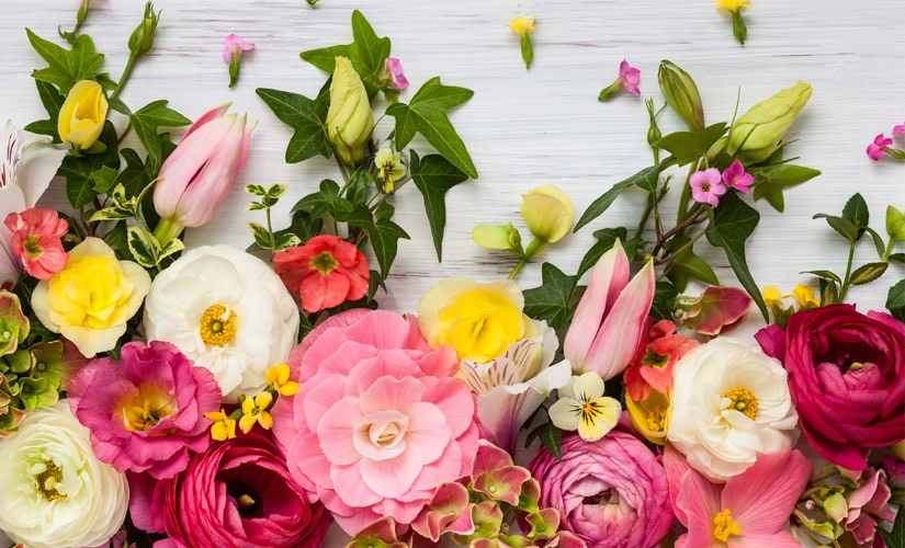 8-Facons-de-Presenter-vos-Plantes-dInterieur