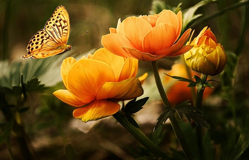 Signification Orange Fleurs