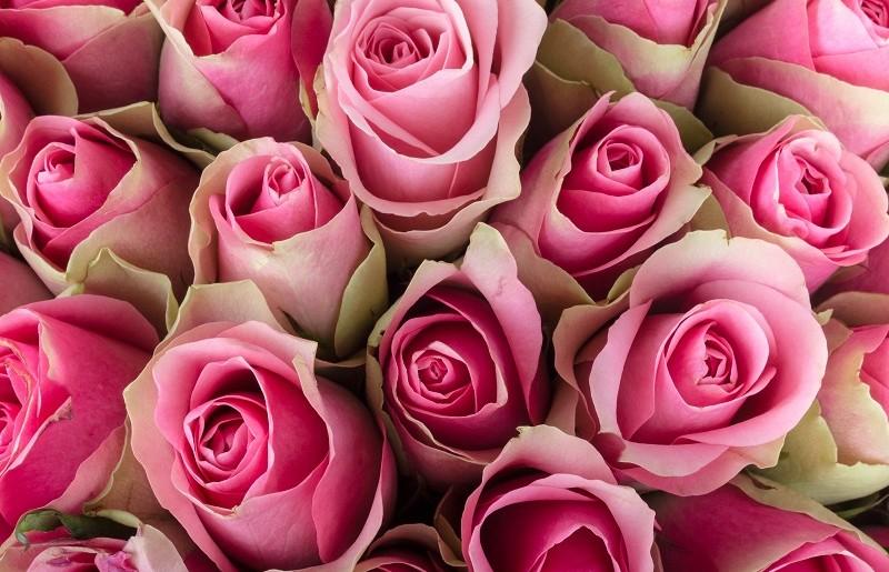 Combien de rose offrir