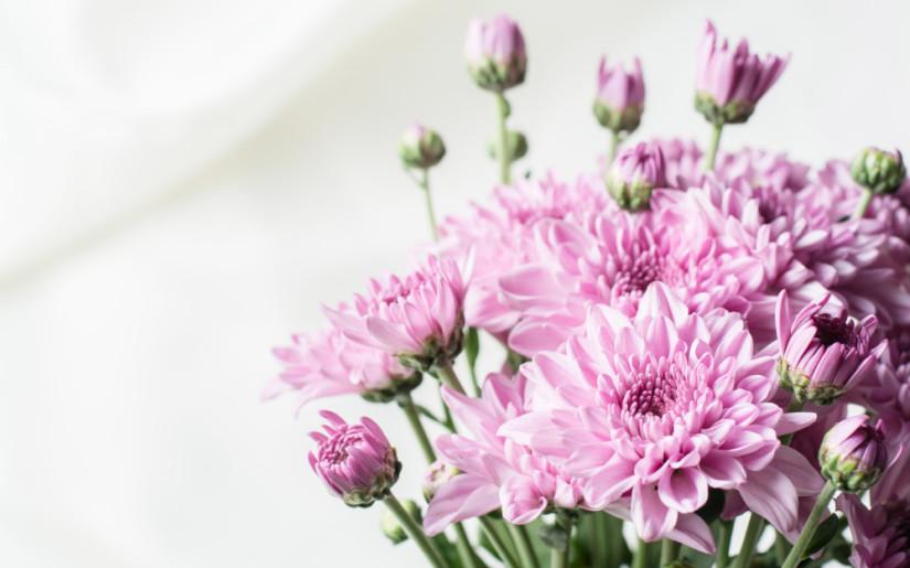 Le chrysanthème