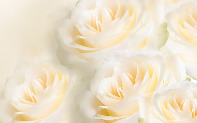 Signification de la rose blanche