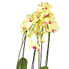 Yellow Orchid Planter