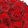 Mass of Red Roses