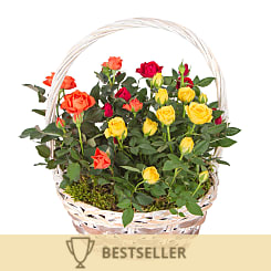 Autumn Rose Basket - Plants