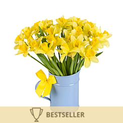 UK Daffodils with Jug - Flowers