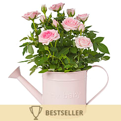 Baby Girl Rose Gift - Plants