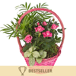 Pink Rose Garden - Hampers