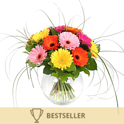 Gerbera Bouquet - Flowers