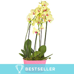 Yellow Orchid Planter - Plants