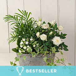 White Garden Basket - Plants