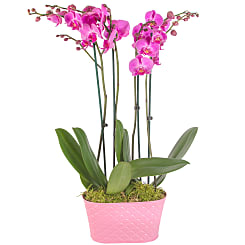 Pink Orchid Planter - Plants