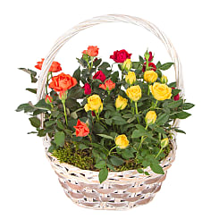 Autumn Rose Basket - Flowers