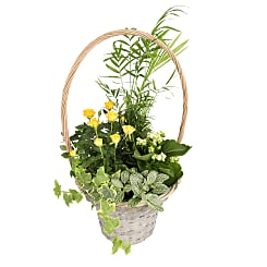 Planted Sunshine Basket - Plants