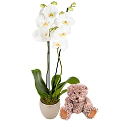 New Baby Orchid Gift Set - Flowers