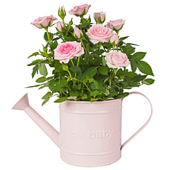 Baby Girl Rose Gift - Flowers