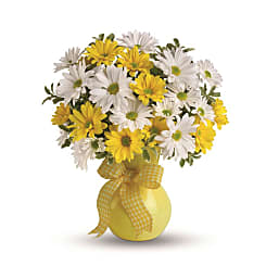 Classic Yellow and White Daisies - Flowers