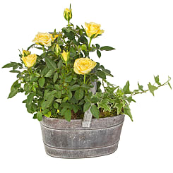 Yellow Rose Trug - Flowers