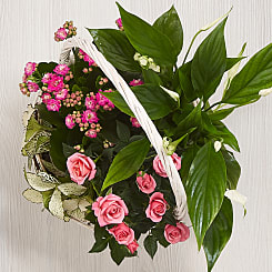 Pink Delights Basket - Plants