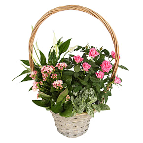 Plant arrangement Pink Blooms Basket