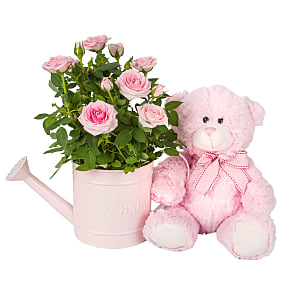 Plant arrangement Baby Girl Rose Gift with Teddy